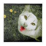 Gato vecino azulejos