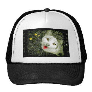 Gato vecino gorras de camionero