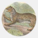 Gato veteado, marmorata del Felis Pegatinas