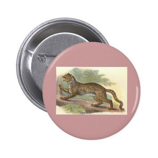 Gato veteado, marmorata del Felis Pin
