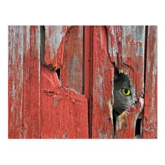 Gato viejo del granero tarjetas postales
