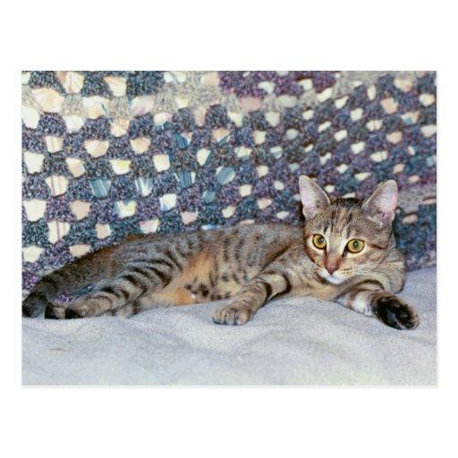 Gato y afgano del resplandor postal