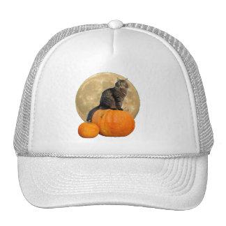 Gato y calabazas gruñones del ángel gorra