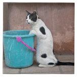 Gato y cubo, Chania, Creta, Grecia Tejas Ceramicas