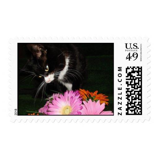 Gato y flores de Charli Sello