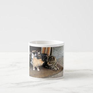 Gato y gatitos que miran fijamente uno a taza de espresso