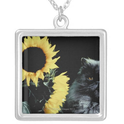 Gato y girasol colgante cuadrado