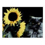 Gato y girasol postal