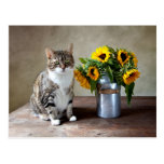 Gato y girasoles postales