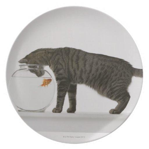 Gato y goldfish plato para fiesta