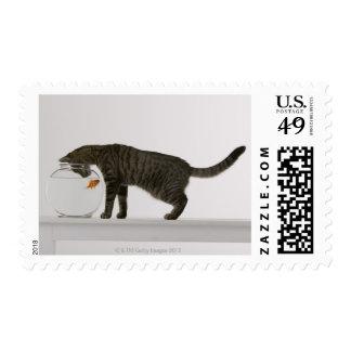 Gato y goldfish sellos