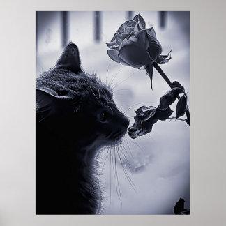 Gato y grande subió posters
