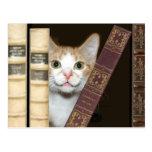 Gato y libros postal