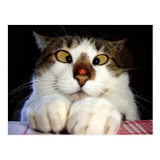 Gato y mariquita bizcos postal