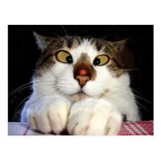 Gato y mariquita bizcos tarjetas postales