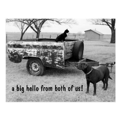 Gato y perro en postal del país