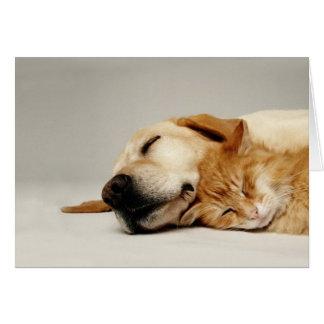 Gato y perro que duermen junto… tarjeta de felicitación