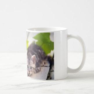 Gato y taza de los mejores amigos del conejito