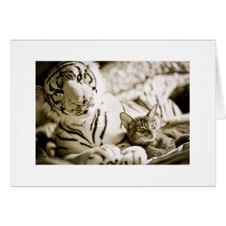 Gato y tigre tarjeta de felicitación