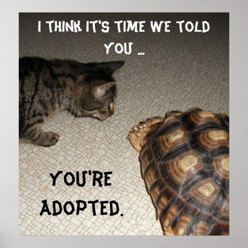 """Gato y tortuga - """"le adoptan """" poster"""