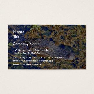 Gator Aligators Swamps Business Card