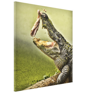 Gator Catching Lunch Canvas Print