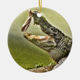 Gator Catching Lunch Ceramic Ornament