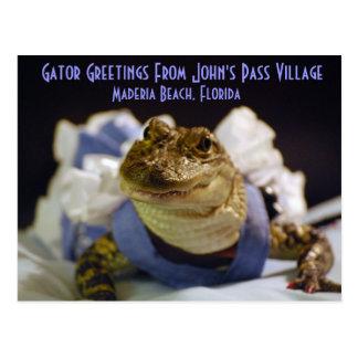 Gator Greetings From John's Pass Village, M... Postcard