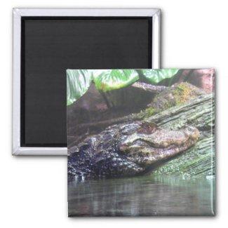'Gator Grins - Magnet #1 magnet