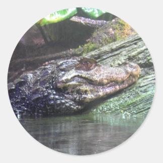 'Gator Grins - Sticker
