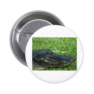 Gator in grass pinback buttons