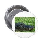 Gator in grass pinback buttons