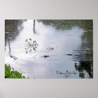 Gator in Pond Poster
