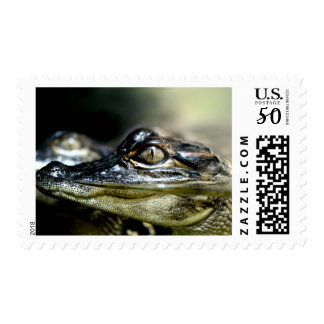 Gator in the Swamp Stamp