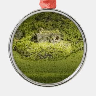 Gator Lurking in Duckweed - Nature Photograph Metal Ornament