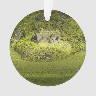 Gator Lurking in Duckweed - Nature Photograph Ornament