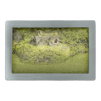 Gator Lurking in Duckweed - Nature Photograph Rectangular Belt Buckle