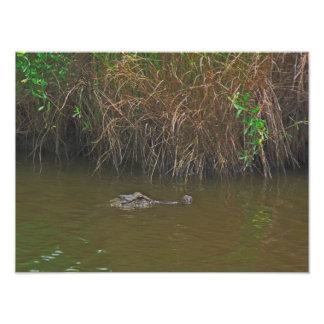 Gator Photo Enlargement