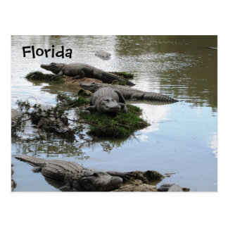 Gator Pond Postcard