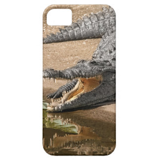 Gator Portrait  with Mouth Wide Open iPhone 5 Cover