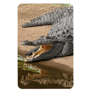 Gator Portrait  with Mouth Wide Open Magnet