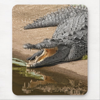 Gator Portrait  with Mouth Wide Open Mouse Pad