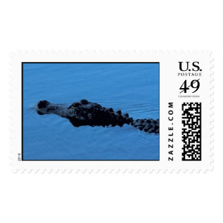 Gator Trail Close-up Postage - Matching Card!