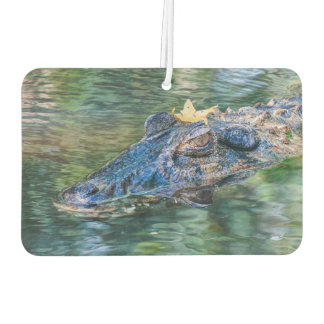 Gator with a crown air freshener
