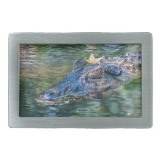 Gator with a crown belt buckle