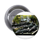 Gators Pinback Button