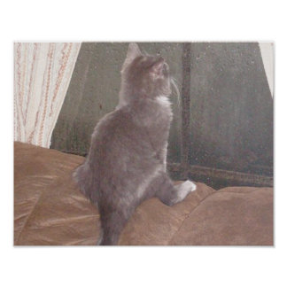 Gatos 11 del maullido póster