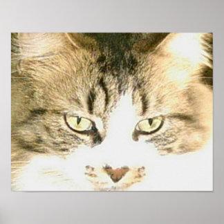 Gatos 14 del maullido póster
