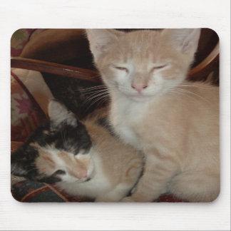 Gatos 28 Mousepad del maullido