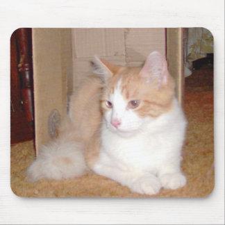 Gatos 35 Mousepad del maullido